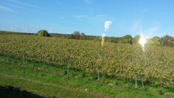 Die Pfalz wohlt